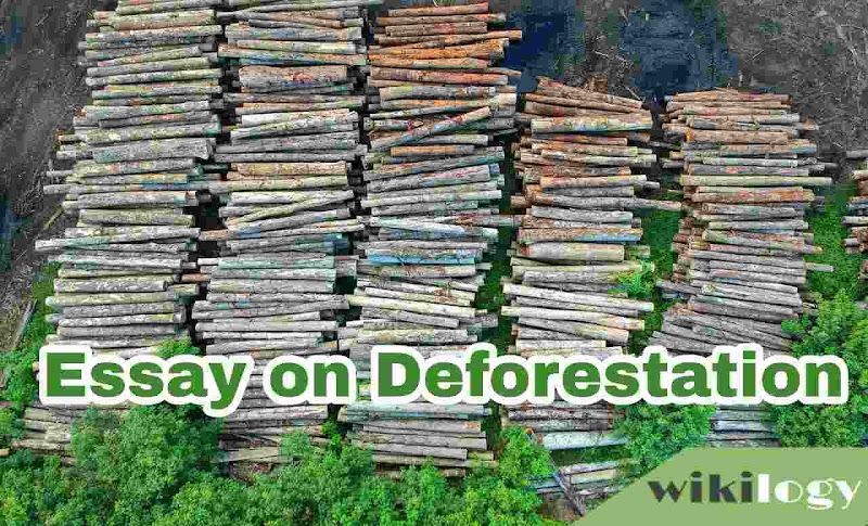 Deforestation Essay Composition