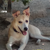 ΠΡΙΝ ΚΑΙ ΜΕΤΑ ΤΗΝ ΥΙΟΘΕΣΙΑ! Βασική εκπαίδευση σκύλου σε 2 απλά βήματα.. (Βίντεο)