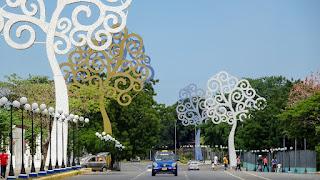 Ceiba trees at Managua