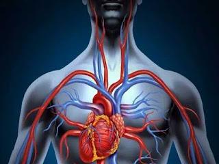 Cara Menjaga Kesehatan Peredaran Darah Agar Tetap Lancar