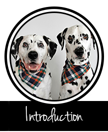 Button to Dalmatian DIY welcome and introduction to the dog blog