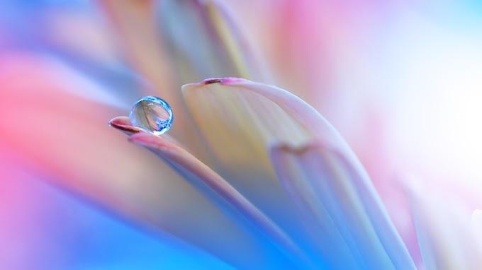 Gota em uma Pétala de Flor