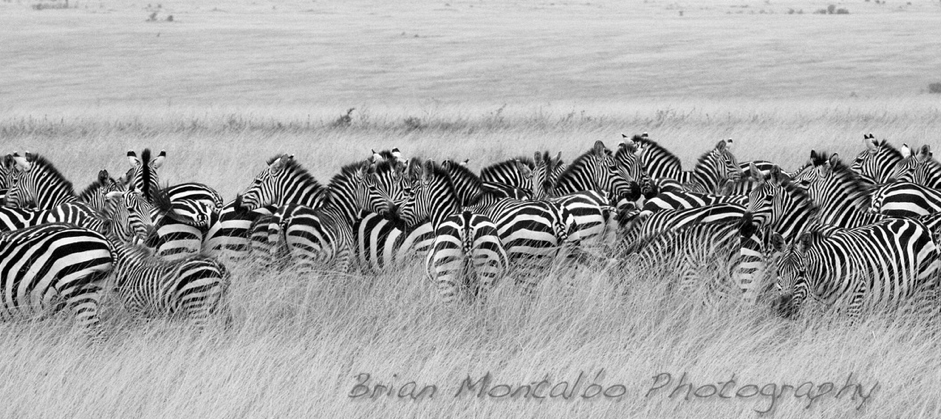 Beyond Adventure Photography Safari