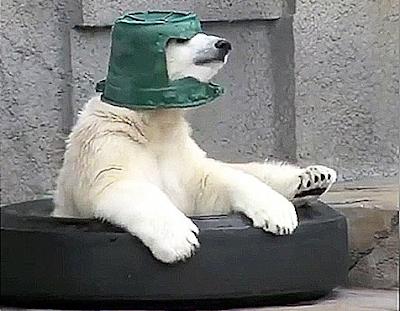 Gemesnya Lihat Beruang Kutub Dan Ember Hijaunya Ini