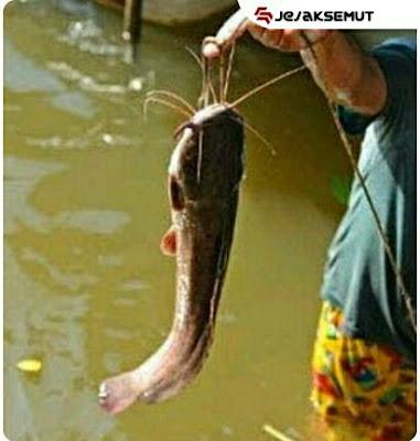 umpan ikan lele liar