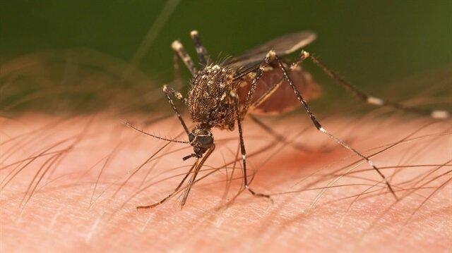 Sıtma nedir? Sıtma belirtileri ve tedavisi nasıl olur?