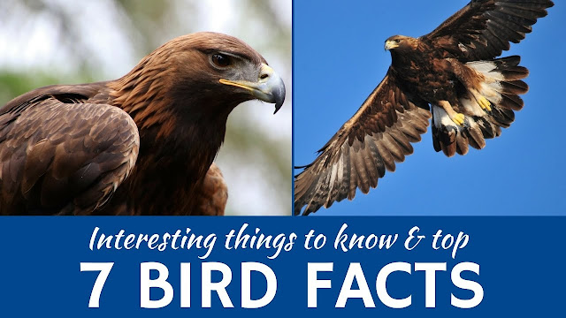 Facts About The Birds, Facts For Birds
