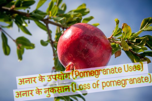 सेहत के लिए अनार के 12 फायदे, पोषक तत्व, उपयोग और नुकसान