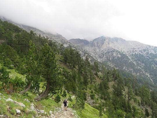 Rzednieje las bośniackich sosen.