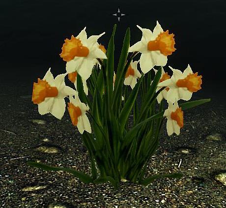 Time for spring hoddminir daffodil yellow 2 narcissus pseudonarcissus mightylinksfo