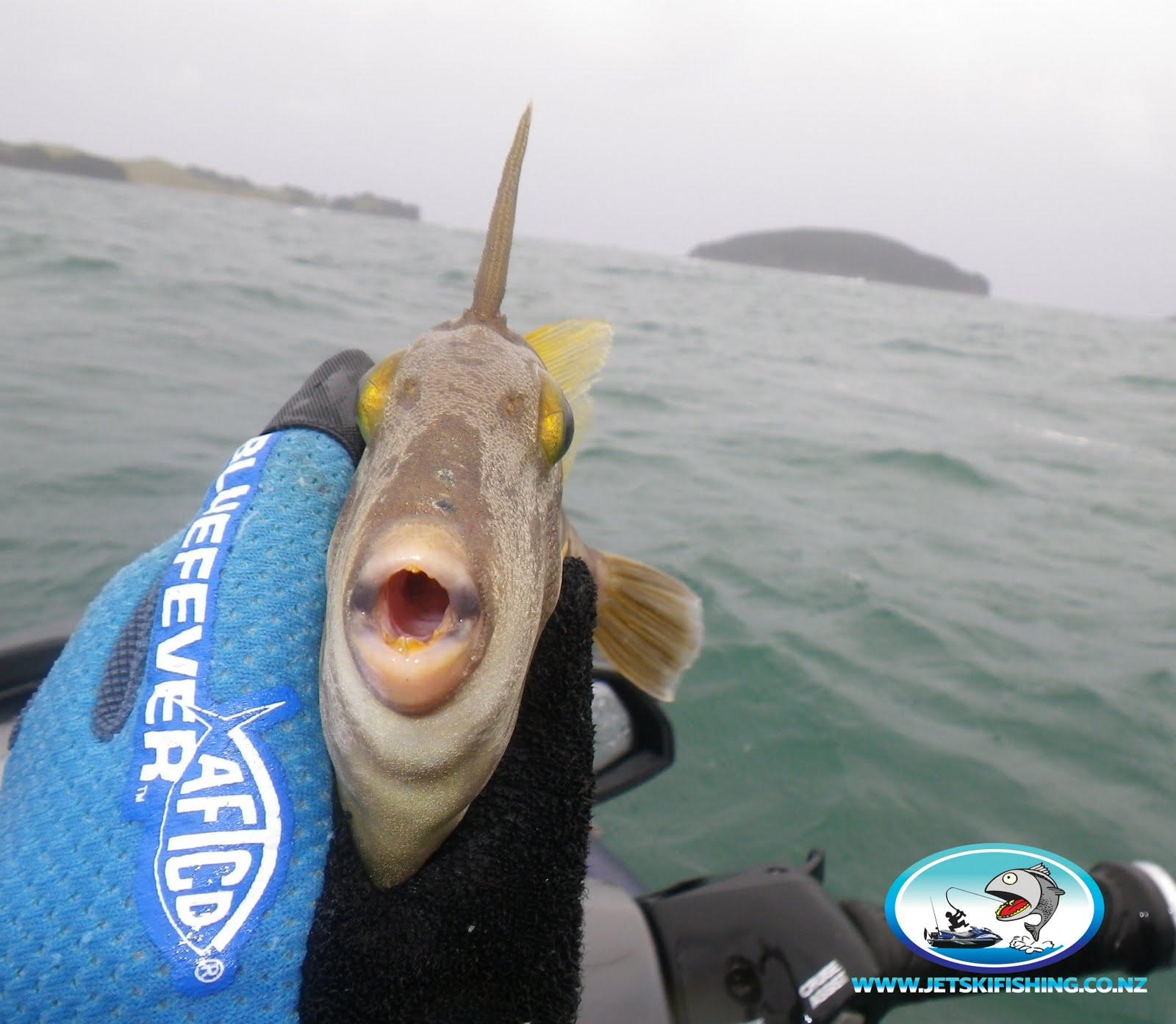 Jet ski fishing Blog: June 2011