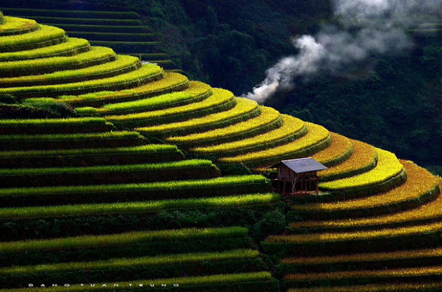 Sapa rice terrace 2