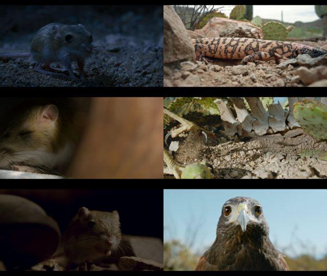 Tiny Creatures Temporada 1 Completa HD 720p Latino Dual