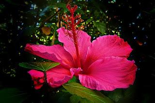 Fungsi dan Bagian Yang Terdapat Dalam Bunga