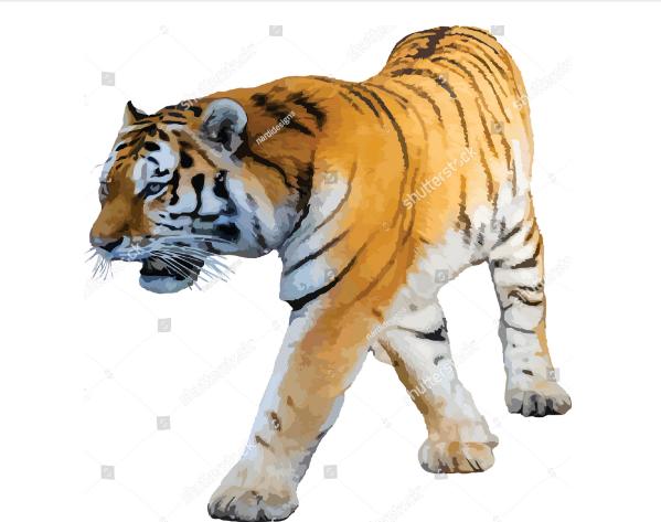 illustration tattoo tiger