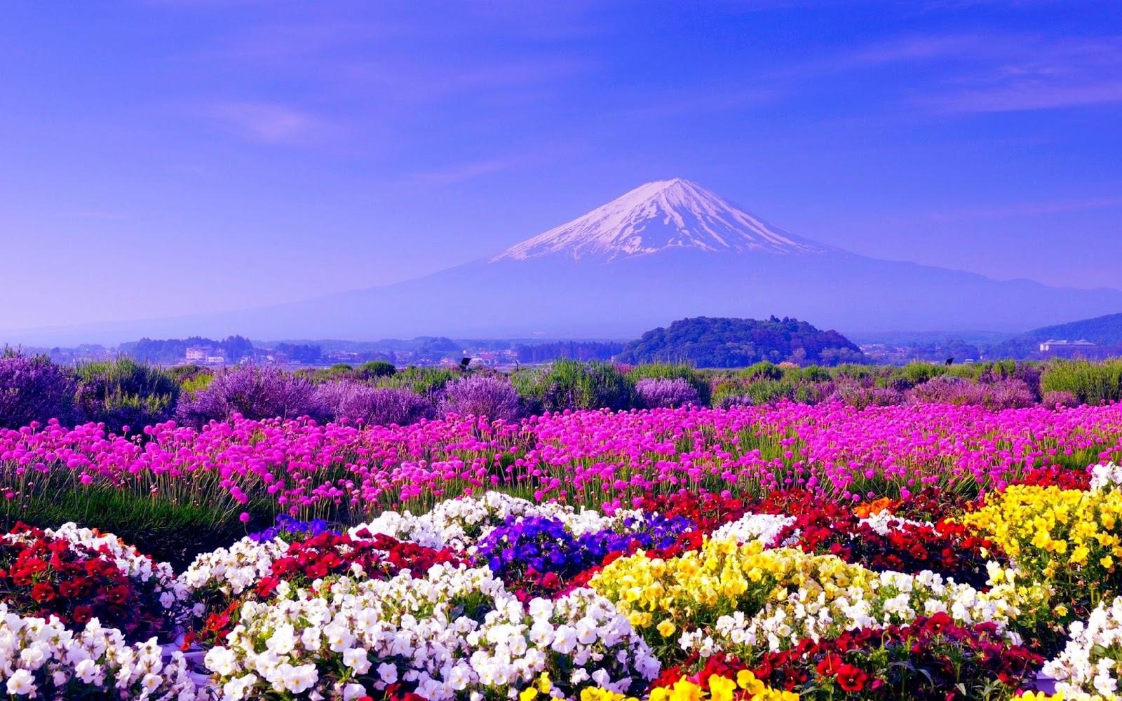Fond d'écran gratuit fleurs des champs - Fonds d'écran HD