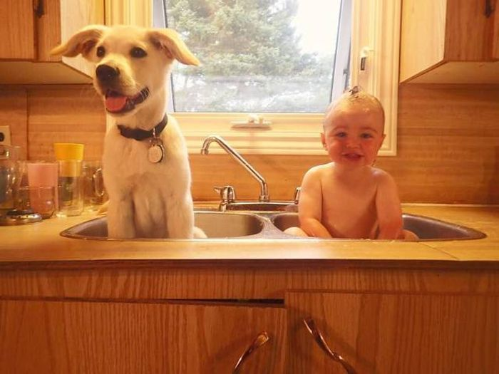 Cute dogs - part 143, funny dog photos, best cute dog pictures