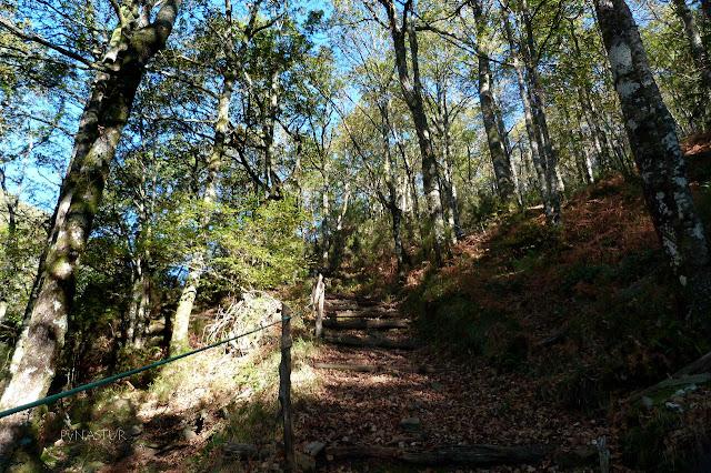 Bosque del Silencio - Los Oscos - Asturias