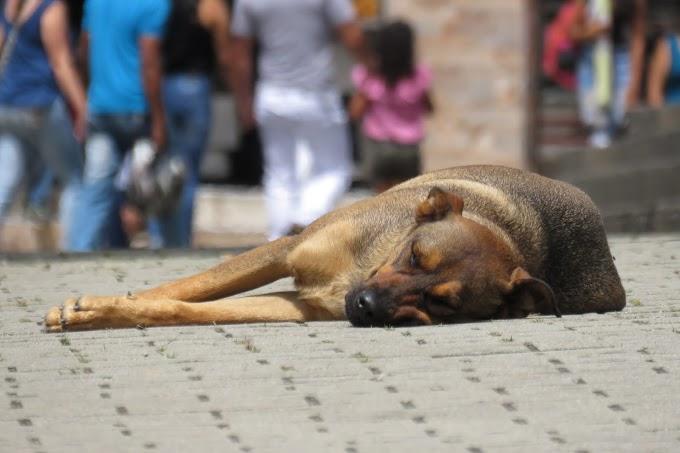 Szigorúbb szankciókat követelnek az állatbarátok