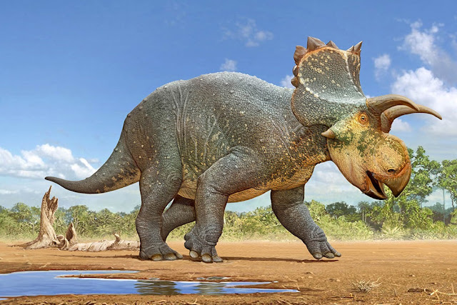 Horned dinosaur Crittendenceratops discovered in Arizona