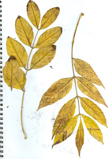 SCANNED LEAF IMAGES