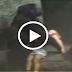 بالفيديو شاهد غوريلا تنقذ طفل سبحان الله سقط بقفص مليئ بالغوريلات أغرب مقطع فيديو قد تراه في حياتك