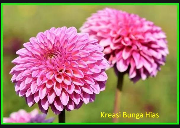 Cara Membuat Bunga Dahlia Dari Kertas Yang Mudah Kreasi Bunga Hias