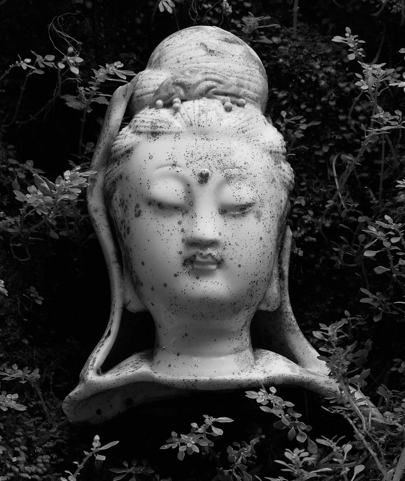 Quan Yin, macro photography,cast off, dead,