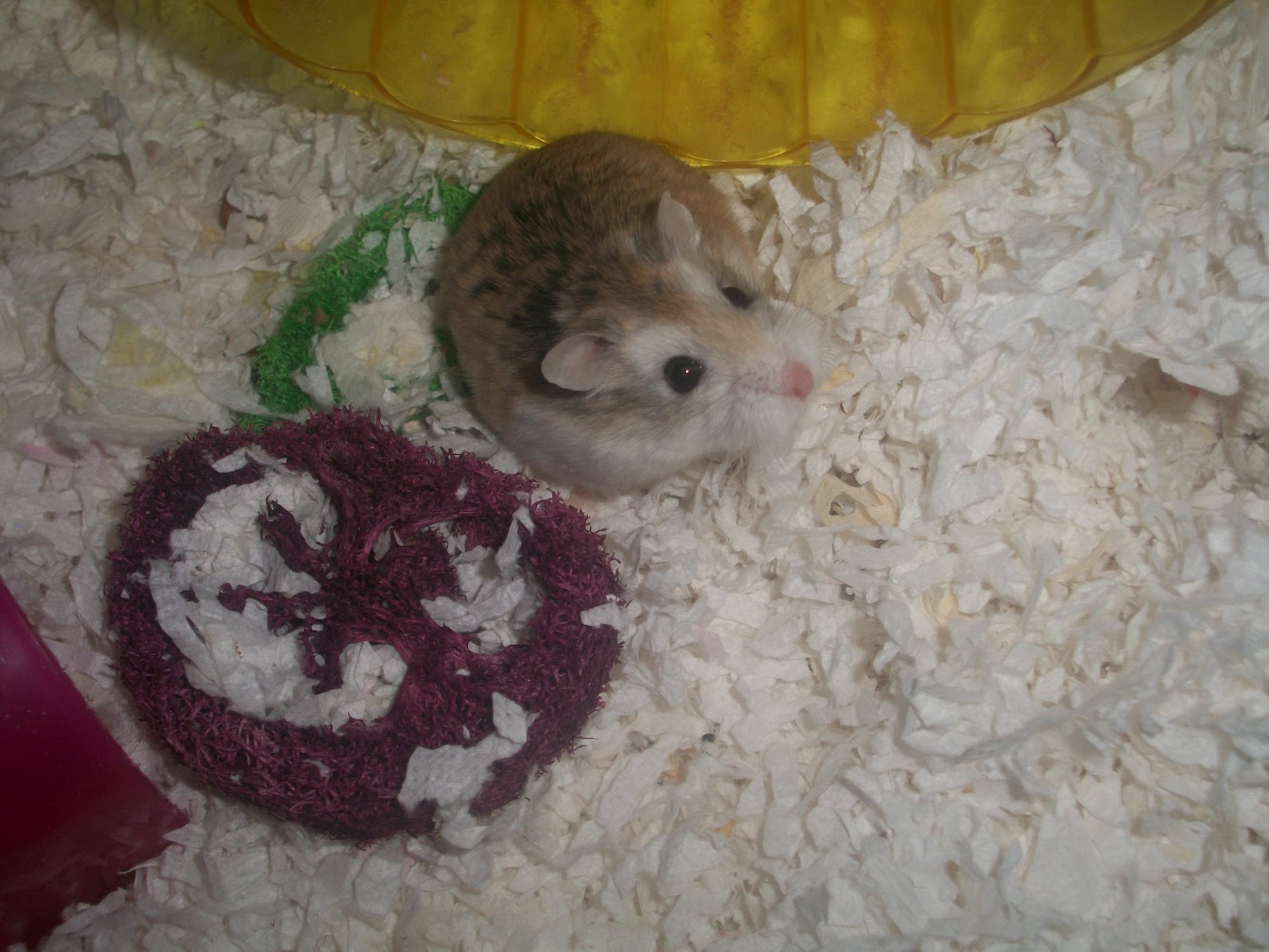 Pams Party & Practical Tips: Homemade Hamster Treats