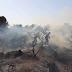 les feux de foréts ravagent des miliers d'ectares en algerie