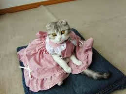 Funny Cats Wearing Clothes Latest Pictures Funny And