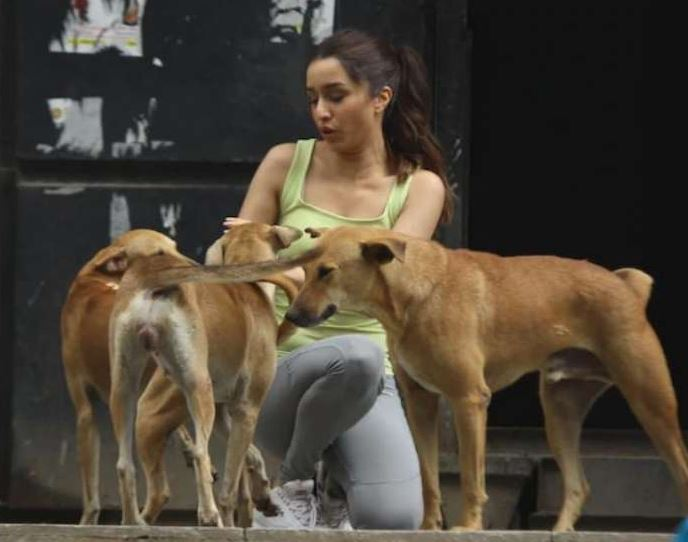 shraddha-kapoor-playing-with-street-dog