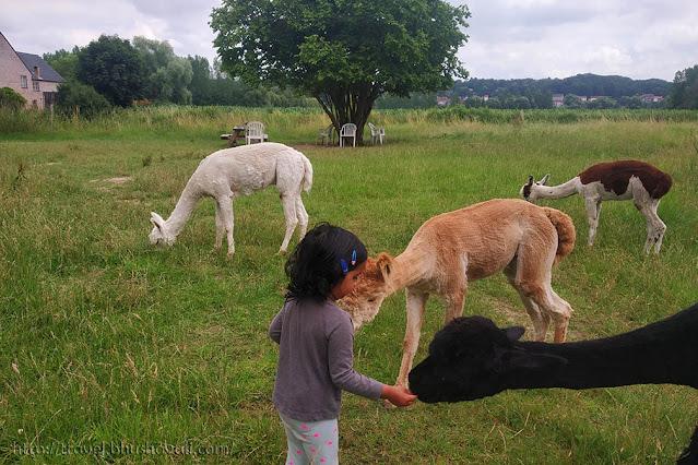 Sint-Alpaca-Rode Petting Zoo Animal Farm Brussels