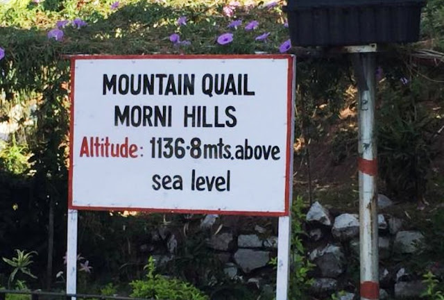 morni hills near chandigarh