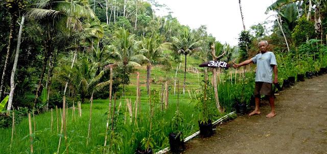 Dusun Kaliduren, Kebonharjo, Samigaluh, Kulon Progo Yang Menghijau