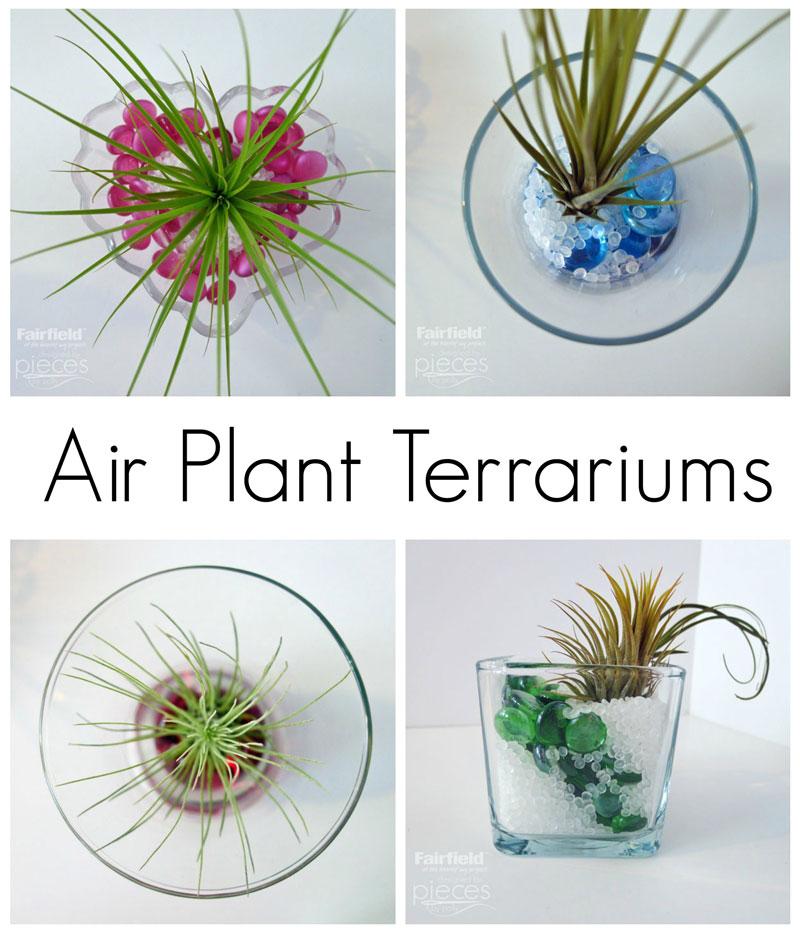 Air Plant Terrarium S: Pieces By Polly: DIY Air Plant Terrariums