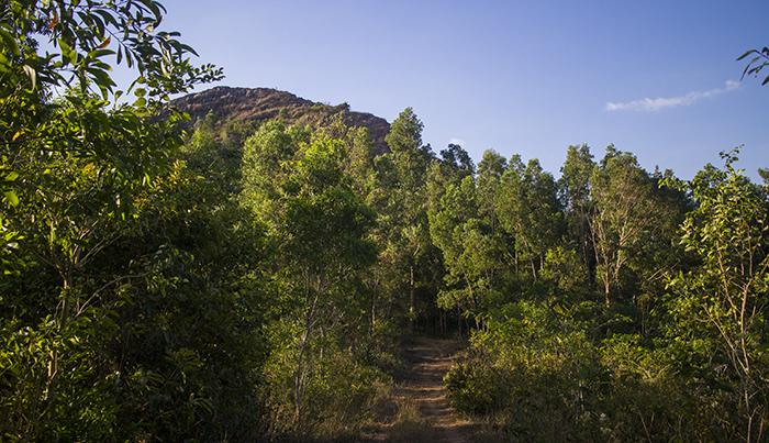 Rute Awal Menuju Puncak Gunung Gajah Mungkur