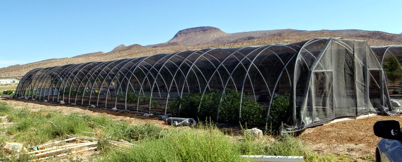 Peachy Xtremehorticulture Of The Desert Desert Greenhouses Should Home Interior And Landscaping Oversignezvosmurscom