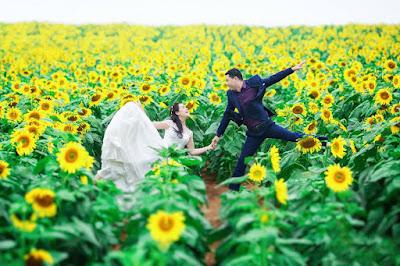 Hoa hướng dương đẹp nhất thế giới 20