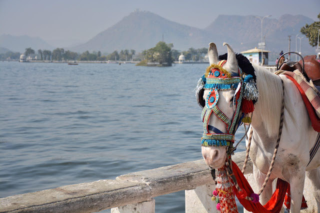 udaipur rajasthan travel community