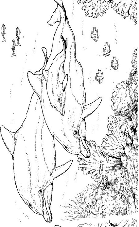 Dolphin Coloring Pages Free for Kids >> Disney Coloring Pages