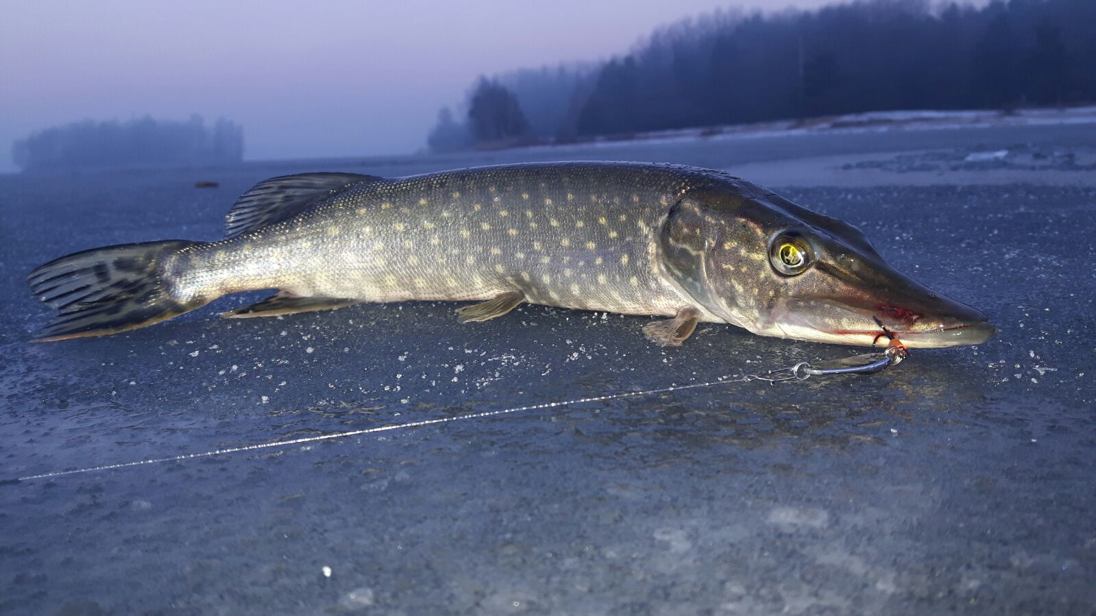 Fishing in poland spinning casting and flyfishing for for Pike ice fishing lures