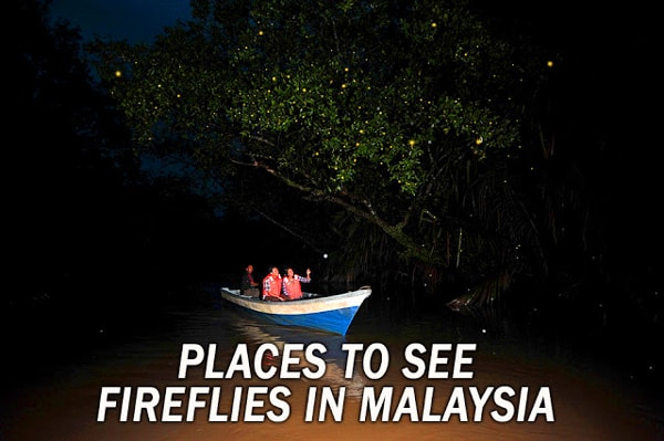 Firefly Places in Malaysia