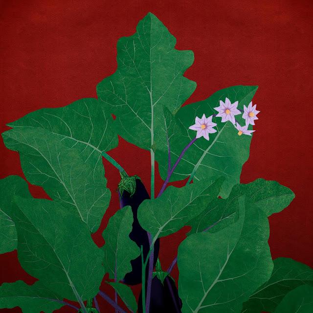 berengenas, planta, flor
