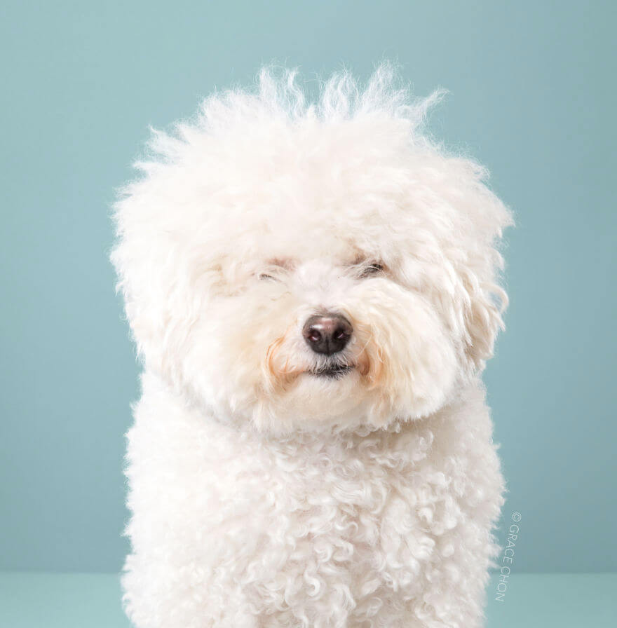7 Cute Pictures Dogs Before And After Japanese Grooming
