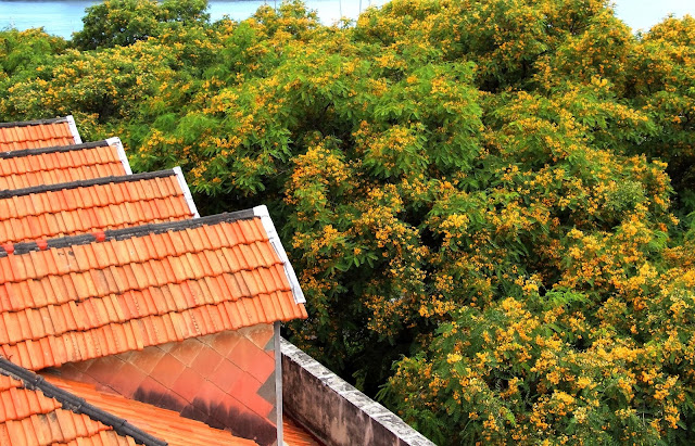 yellow flowers on the roof