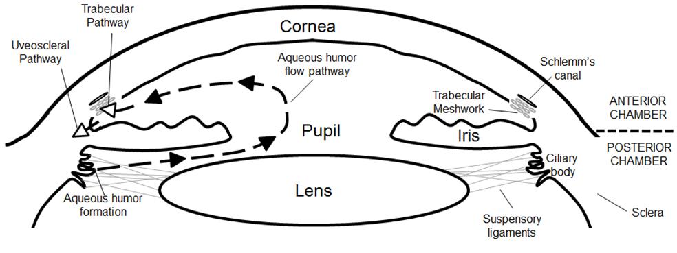 fda to review new glaucoma drop vesneo