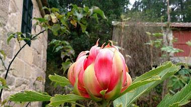 Pazo de La Saleta: un jardín botánico en Pontevedra