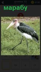 На поле по зеленой траве ходит птица из семейства аистовых марабу и острым клювом