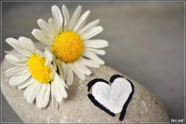 ảnh 2 bông hoa trên cục đá có hình trái tim